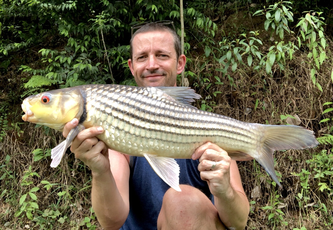 juliens carp thailand
